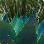 Cactus and Grass
